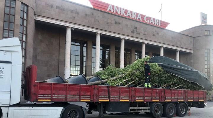 """Ankara Valiliği """"Mabet Ağaç"""" fidanlarını kaldırdı"""
